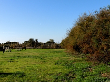 área de pic-nic de Can Dimoni, Delta del Llobregat octubre 2013