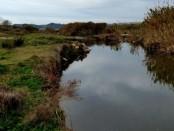 Censando el Llobregat: febrero 2014