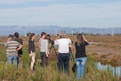 Curso de identificación de limícolas – excursión/clase práctica. Grupo Local SEO Barcelona octubre 2014