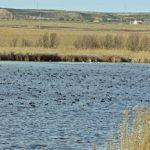 Salida ornitológica al embalse de San Salvador y lagunas y estepas del bajo Cinca (Huesca) marzo 2018 – Grupo Local SEO Barcelona