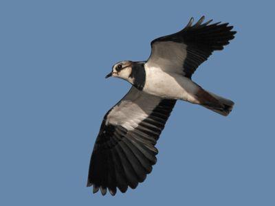 Salida ornitológica al Remolar-Filipines (Delta del Llobregat) domingo 14 de Diciembre 2014.
