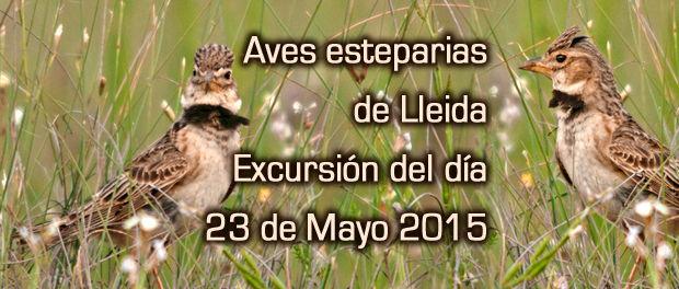 Aves esteparias de Lleida - salida ornitológica mayo 2015 - Grupo Local SEO Barcelona