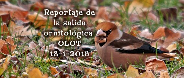 Crónica de la salida ornitológica a Olot enero 2018