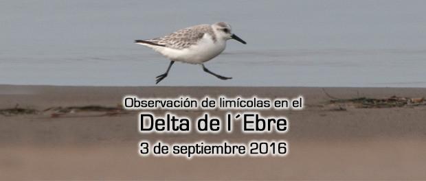 Salida ornitológica Delta del Ebro 3 de septiembre 2016 – observación de aves limícolas – Grupo Local SEO Barcelona