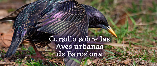Descubre las aves de Barcelona - cursillo de ornitología urbana - 30 de mayo, 1 y 4 de junio 2016