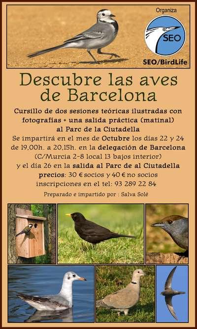 """Cursillo """"Descubre las aves de Barcelona"""" SEO Birdlife 2013"""