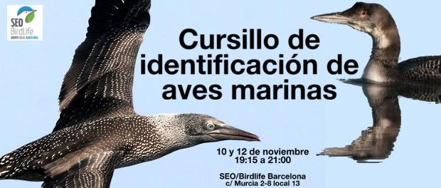 Curso de identificación de aves marinas, noviembre 2015 - Grupo Local SEO Barcelona