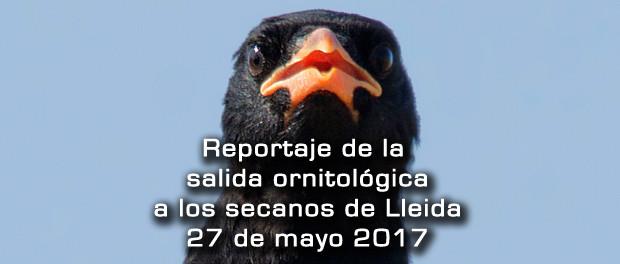Crónica de la salida a estepas de Lleida mayo 2017 – Grupo Local SEO Barcelona
