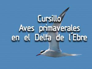 Cursillo sobre las aves primaverales en el Delta del Ebro - Sábado 15 y domingo 16 de abril 2017 - SEO/Birdlife