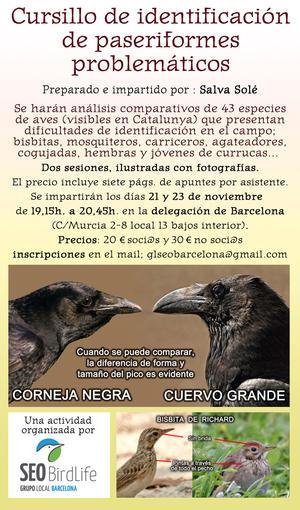 Cursillo de identificación de paseriformes problemáticos 21 y 23 de noviembre 2016