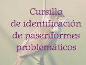 Curso identificación de paseriformes octubre 2018 - Grupo Local SEO Barcelona