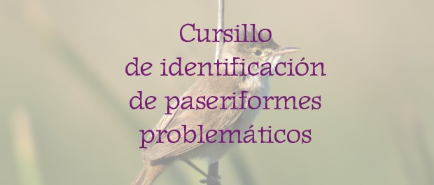 Curso identificación de paseriformes problemáticos - octubre 2018 - Grupo Local SEO Barcelona
