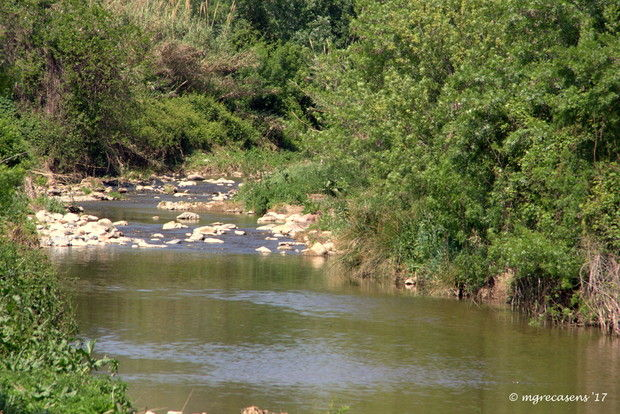 El padre del río Besòs - Grupo Local SEO Barcelona