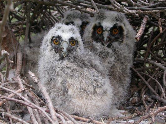 jornada naturalista y de observación de aves en Gallecs con el Club Aventurer@s de SEO/Birdlife