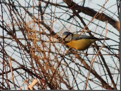 Jornada naturalista y de observación de aves en Caldes de Montbui con el Club Aventurer@s de SEO/Birdlife, organizada por el Grupo Local SEO Barcelona