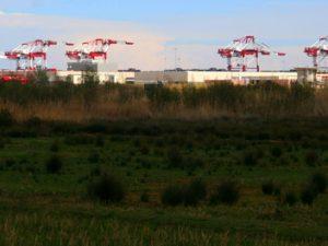 Un pequeño paraíso amenazado: reflexiones en el Delta del Llobregat - Grupo Local SEO Barcelona