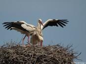 Excursión a Ivars d'Urgell - salida ornitológica 18 de abril 2015 - Grupo Local SEO Barcelona