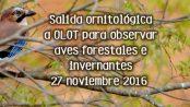 Observación de aves forestales e invernantes en Olot: noviembre 2016