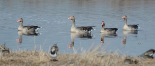 Observación y fotografia de aves – reflexiones