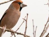 Salida ornitológica Olot enero 2016 - Observación de aves forestales residentes e invernantes - Grupo Local SEO Barcelona