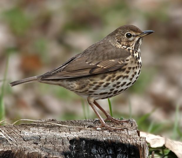 Salida ornitológica a Olot – 12 de enero 2019 – Grupo Local SEO Barcelona