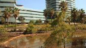 Pajarear en Barcelona: el parque de Diagonal Mar – Grupo Local SEO Barcelona
