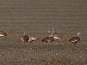 Salida a la Reserva Ornitológica Finca San Miguel - noviembre 2015 - Grupo Local SEO Barcelona