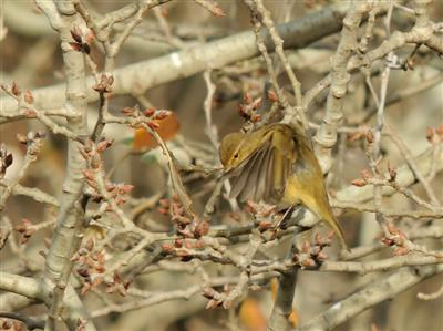 Censo de aves en los espacios no protegidos del Delta del Llobregat