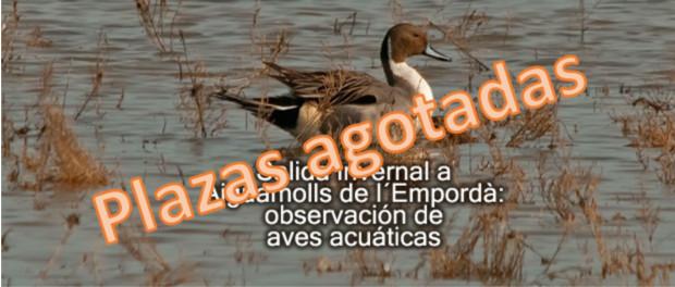 Salida a Aiguamolls de l´Empordà: observación de aves acuática