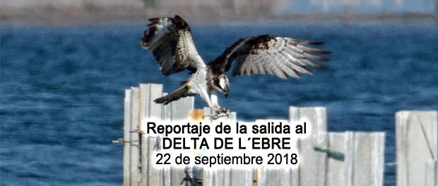 Crónica de la salida al delta de l´Ebre 22 de septiembre 2018