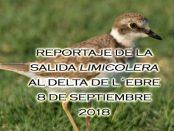 Crónica de la salida del cursillo de identificación de limícolas delta de l´Ebre 8 de septiembre 2018