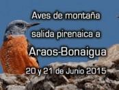 Salida ornitológica Araós-Bonaigua 20 y 21 de junio 2015 - Grupo Local SEO Barcelona