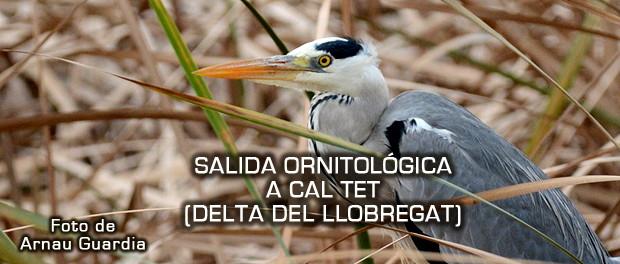 Salida ornitológica a Cal Tet - febrero 2017 - Grupo Local SEO Barcelona