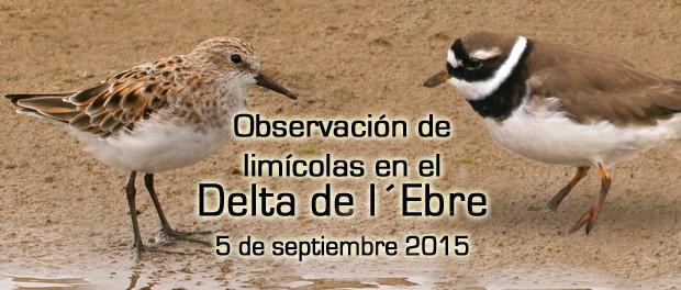 Salida ornitológica Delta del Ebro - septiembre 2015 - Grupo Local SEO Barcelona