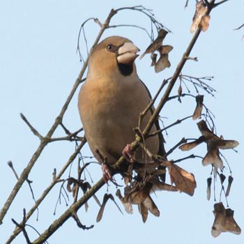 Salida ornitológica a Olot – noviembre 2016 – Grupo Local SEO Barcelona