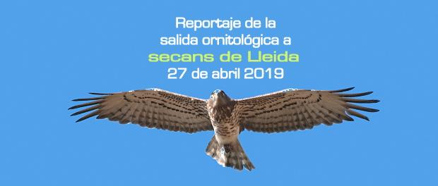 Salida ornitológica estepas de Lleida 27 de abril 2019 – Grupo Local SEO Barcelona