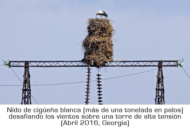 Cigüeña blanca: verlas antes de San Blas – ¡Conócelas! 126 – Grupo Local SEO BARCELONA