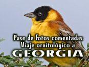 Viaje ornitológico a Georgia y Armenia