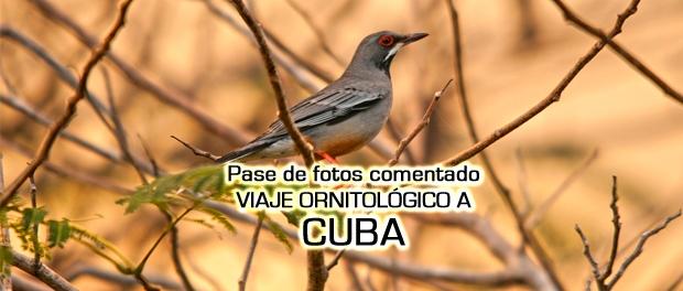 Viaje ornitológico a Cuba - pase de fotos comentado