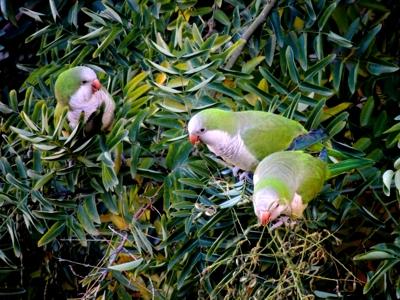 """25 de enero 2015 Club Aventurer@s de SEO/Birdlife en la fiesta """"Convivir es fácil"""" de la Asociación de amigos del castillo de Montjuic"""