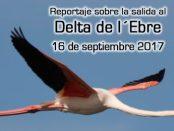 Crónica de la salida al delta de l´Ebre septiembre 2017 – Grupo Local SEO Barcelona