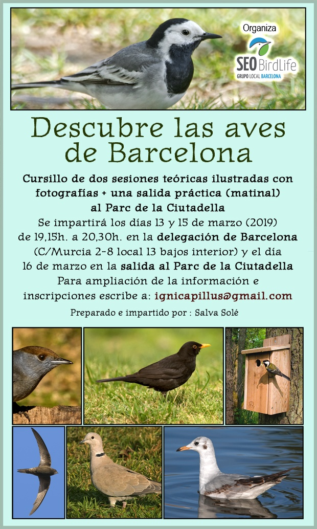 Curso aves urbanas – marzo 2019 – Grupo Local SEO Barcelona