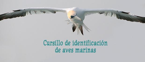 Curso identificación de aves marinas diciembre 2018 - Grupo Local SEO Barcelona