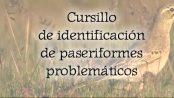 Cursillo de identificación de paseriformes problemáticos 4 y 6 de junio 2018