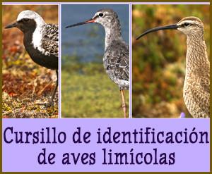 Cursillo de identificación de aves limícolas, marzo 2017