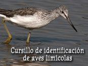 Curso identificación de limícolas- septiembre 2017 - Grupo Local SEO Barcelona