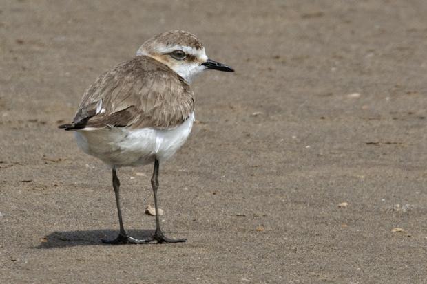 Salida ornitológica Delta de l´Ebre 25 de mayo 2019 – Grupo Local SEO Barcelona