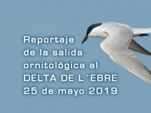 Salida ornitológica Delta de l´Ebre 5 de mayo 2019 – Grupo Local SEO Barcelona
