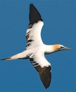 El Delta a vista d'ocell - el litoral on la terra i el mar es barregen