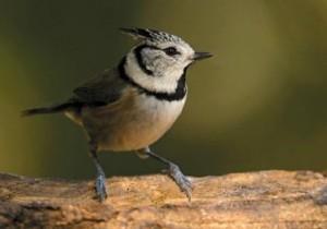 El pinar: el jardín del delta - El Delta a vista de pájaro